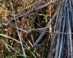 World Bigfoot Radio ~ Caveman Squatching in Montana